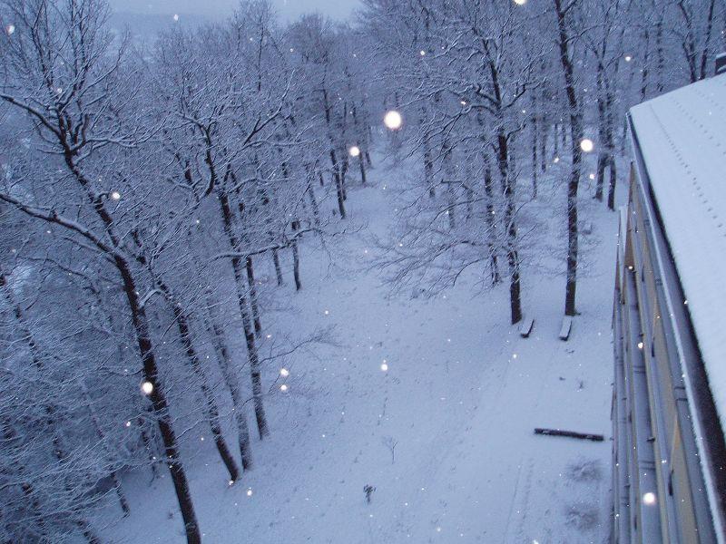 Snjezni gaj doma