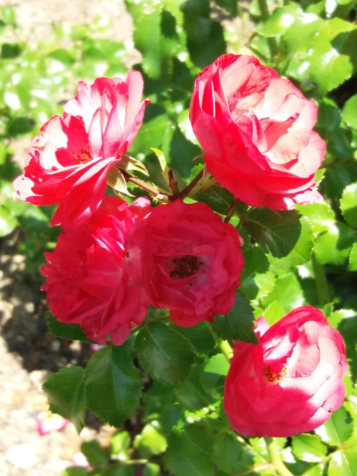 Web cvijet 3